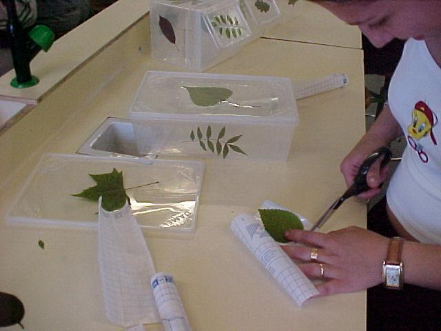 Pin decoraciones de hojas cuaderno wallpapers real madrid for Decoraciones para hojas